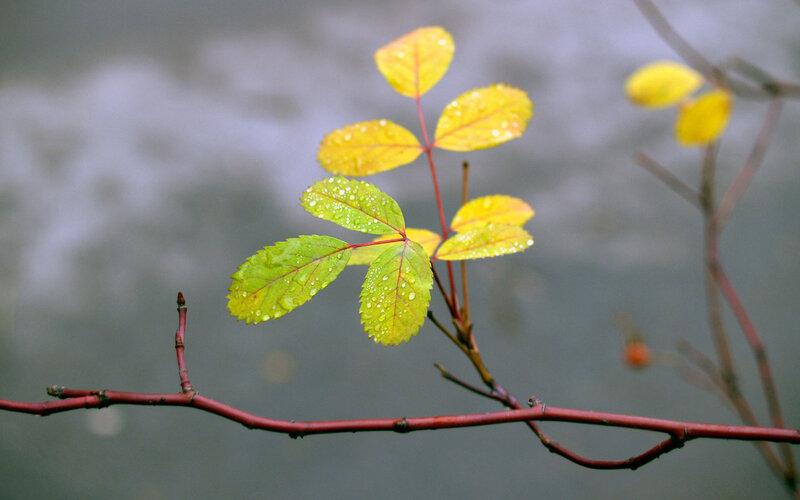Живые картинки осень 12
