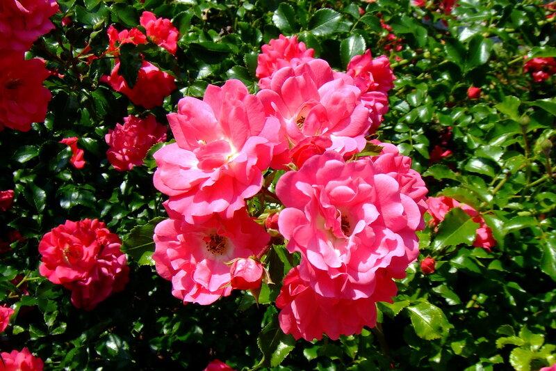 Резеда цветок картинки 4