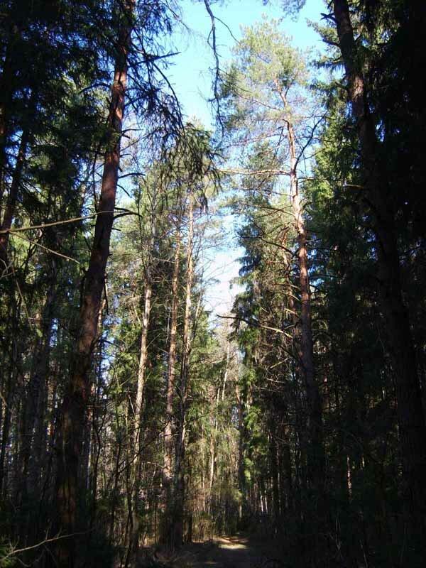 село Перхушково, в лесу