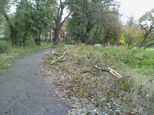 121006_152018 Ветви вдоль дороги