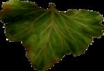 dus-intothedarkness-leaf2.png