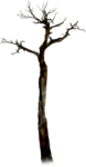 NLD Tree (2).png