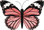 jss_bluejeans_butterfly pink 2.png