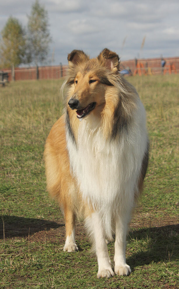 Недельные курсы повышения квалификации для собакообожак :-) Приглашаем всех!!! - Страница 2 0_7dab7_331bccf7_XXL