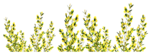 Flowers1-GI_SummerBreeze.png