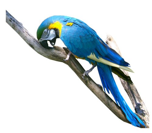 FBR_macaw_cyborgsuzystock__11-8-07.png
