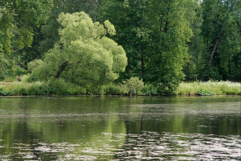Павловский парк, Розовопавильонный пруд
