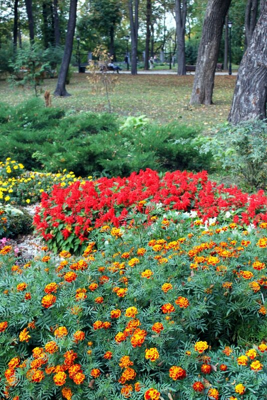 Осенние цветы Мариинского парка