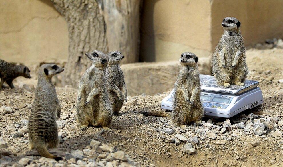 Britain Zoo Measurments