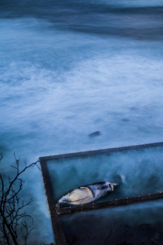 Блоги. Фотоконкурс National Geographic Photo Contest 2012. парке, время, Национальном, Рауль, «Люди», «Места», номинациях, победителю, выберет, одному, ноября, озером, Женщина, Австралия, Крейтер, Озеро, фотографии, Огромная, Гроза, «Природа»