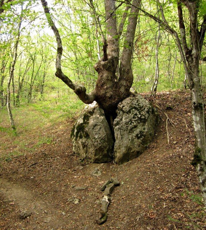 Дерево в камне
