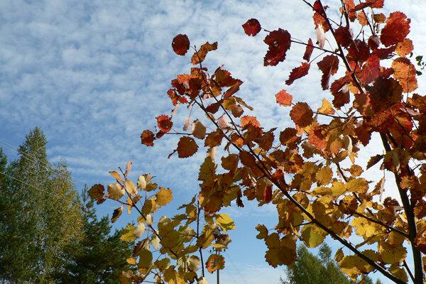 почему я люблю осень небо