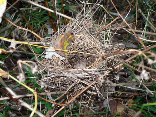 гнездо опустело