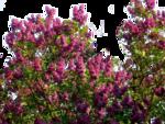 цветы (30).png