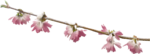 ial_llv_blooming_branch3.png