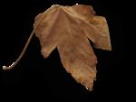 natali_halloween_leaf11-sh.png