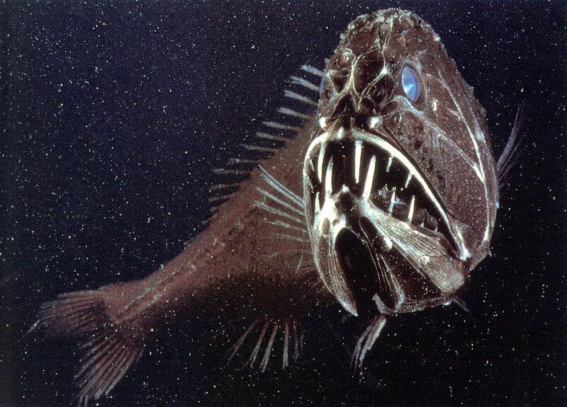 Топ самые страшные рыбы в мире