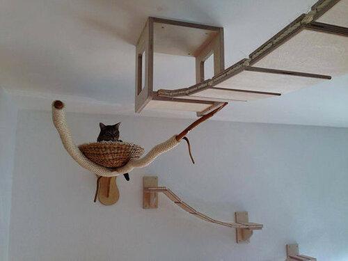 Мебель для кошек - настенные аттракционы