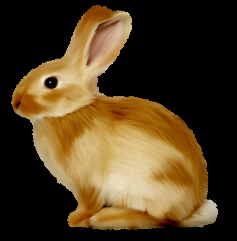 Картинки животных для детей на прозрачном фоне