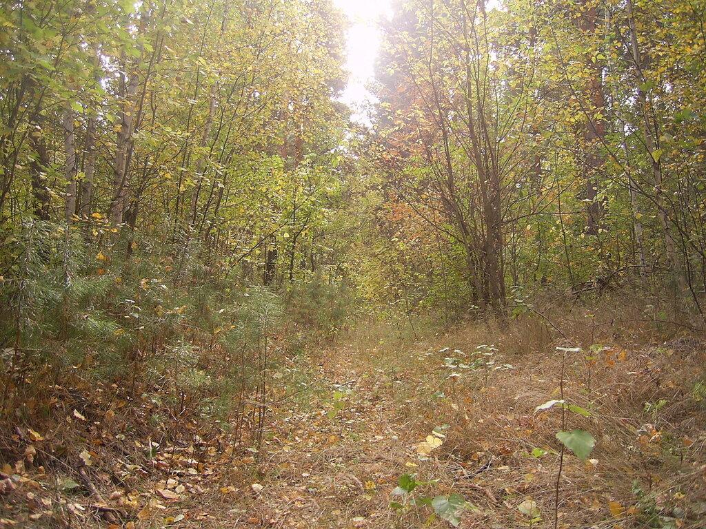 Аткарский лес