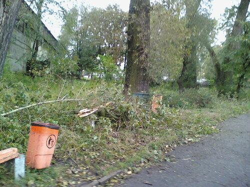 121006_152027 Ветви вдоль дороги