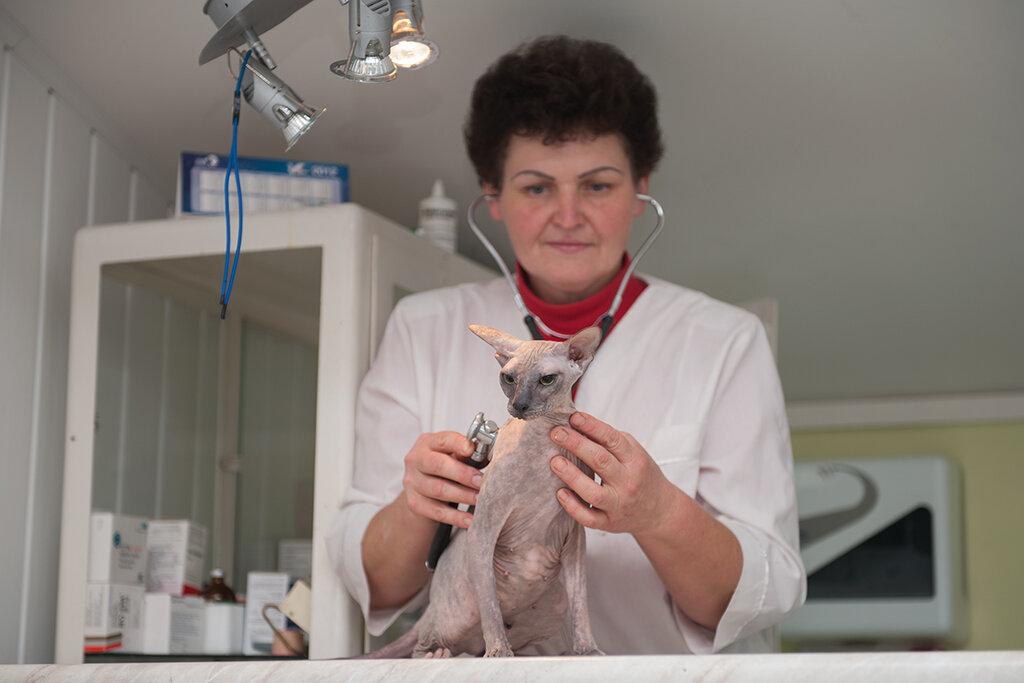 Как кастрируют кошек