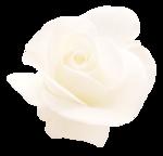 «victorian rose» 0_94aa9_eaaf243f_S