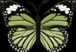 jss_bluejeans_butterfly green 2.png