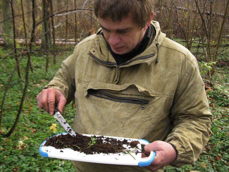 Просмотр на месте пробы почвы и подстилки. Фото Гринпис России.