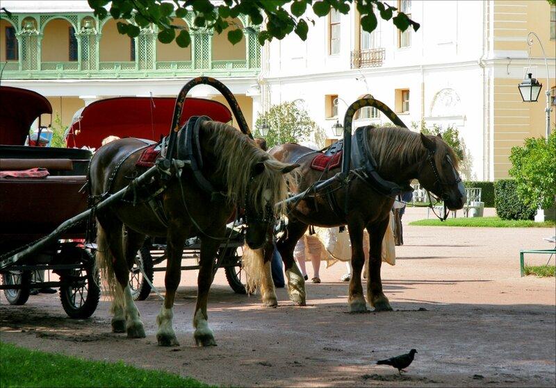 Павловский парк, Лошади