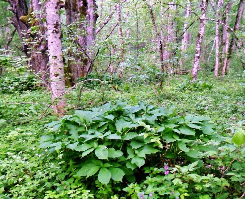 Утром, в апрельском лесу