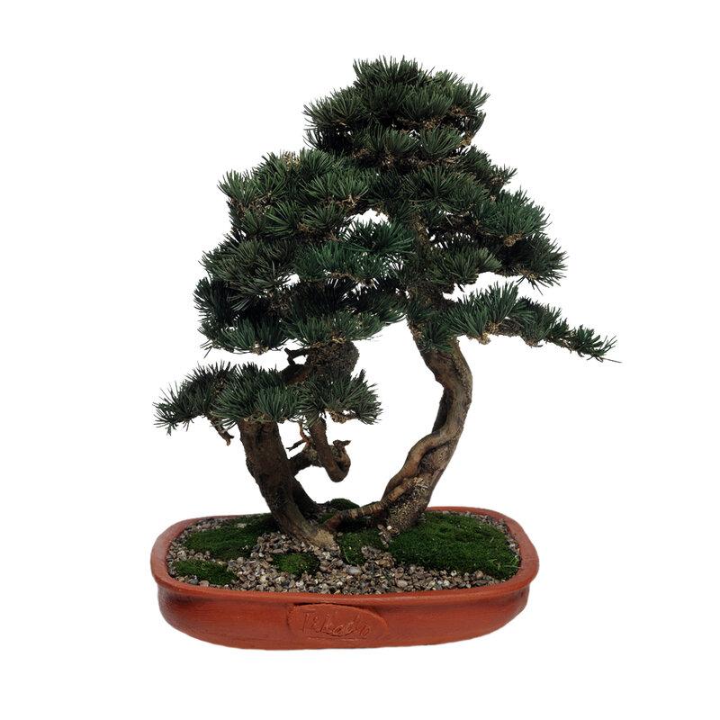 Теги. миниатюрное. raster. tree. turbobit.net. растр. clipart.  Bonsai. depositfiles.com.  Бонсай.  ANutaStar.