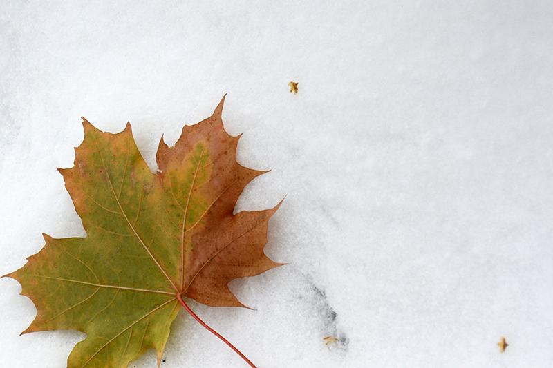 осень под снегом 10
