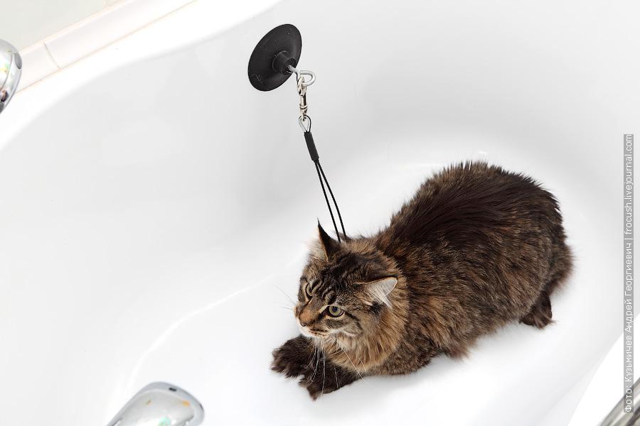 Закрепляем присоску фиксатора на стене ванной. Петлю фиксатора затягиваем на шее животного