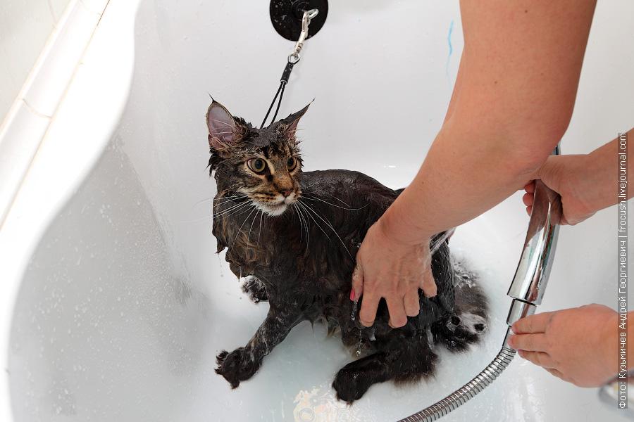 Смываем шампунь