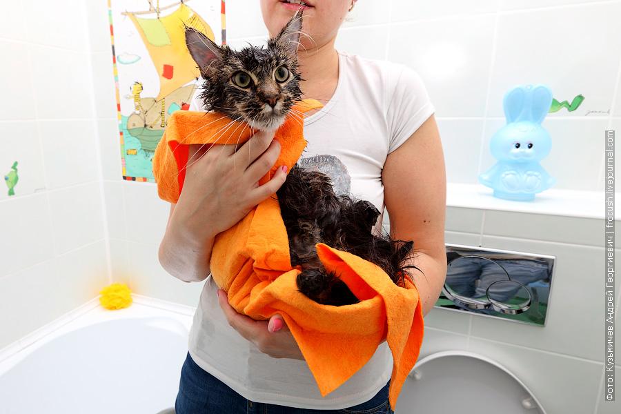 Освобождаем животное из петли фиксатора. Достаем кошку из ванной и держим некоторое время на руках в полотенце