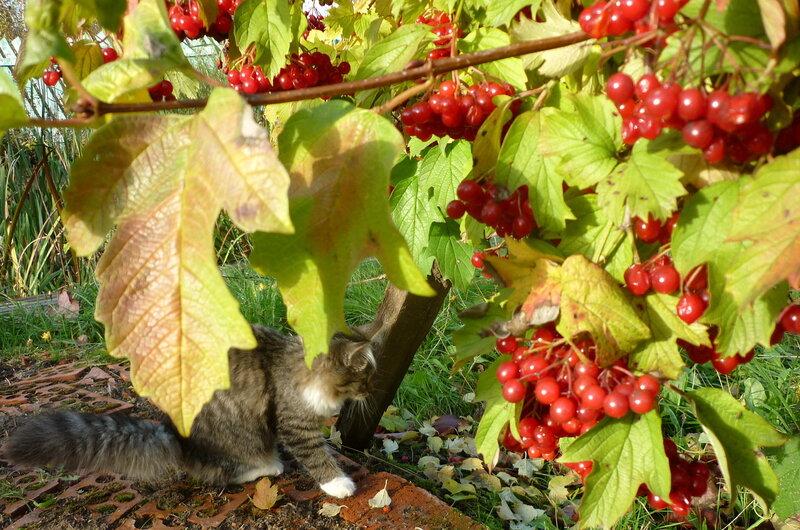 Картинки о осени урожай