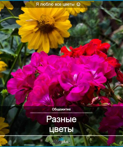 Я люблю все цветы, часть 25