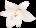 mdl_inthestillness_flower1.png