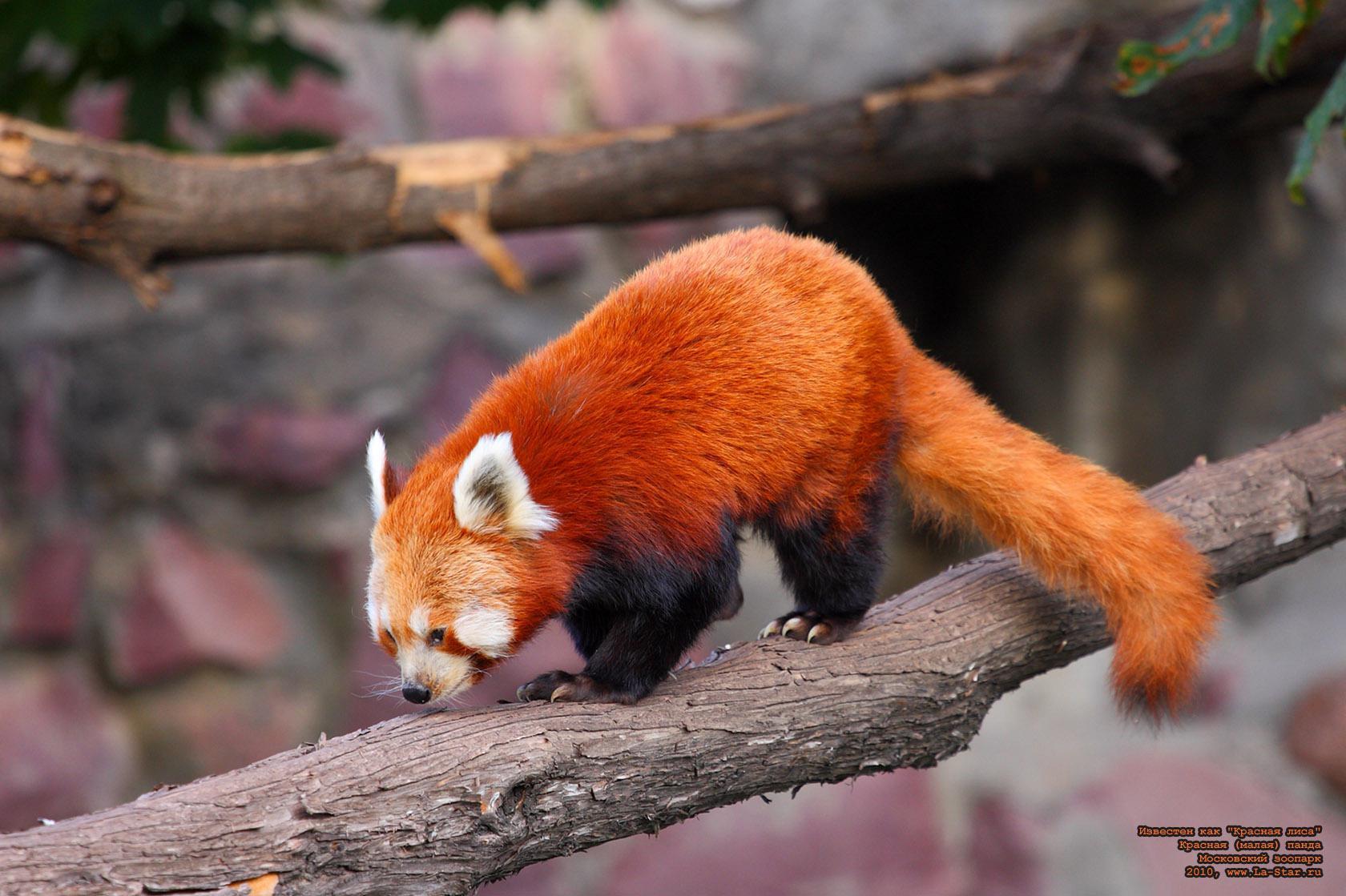 Смысл многих образов зверей во сне очевиден и буквален: сонник предсказывает перемены, разъясняя, к чему снится непонятная зверушка.