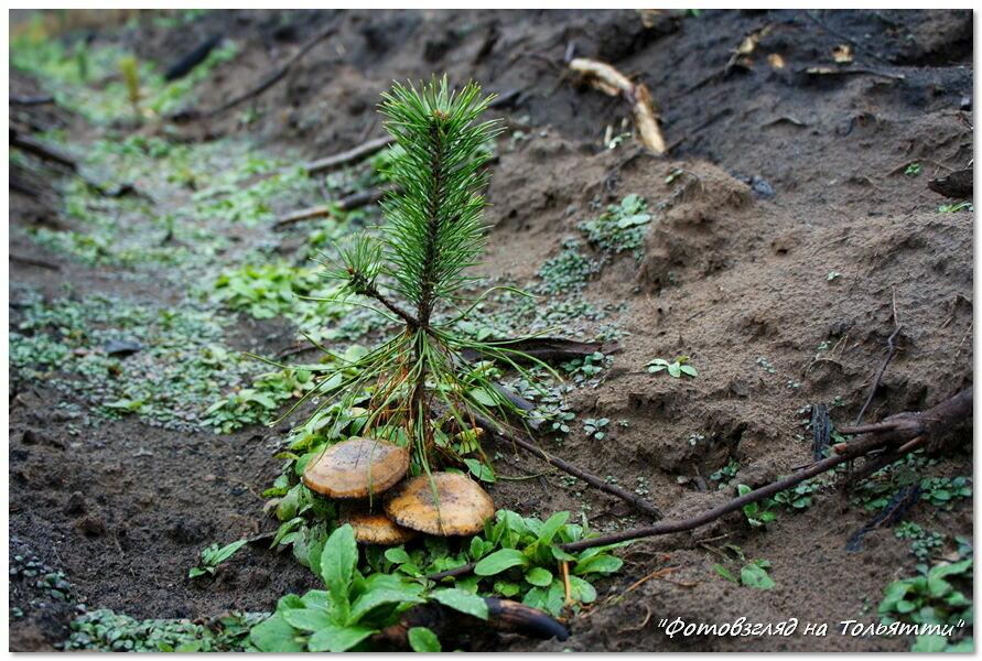 """Посадка """"Нашего леса"""""""