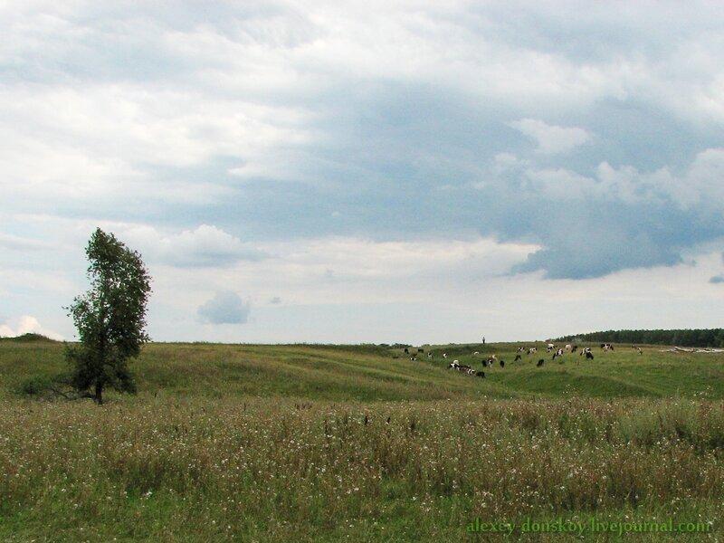 Буколика в районе Мокринского моста