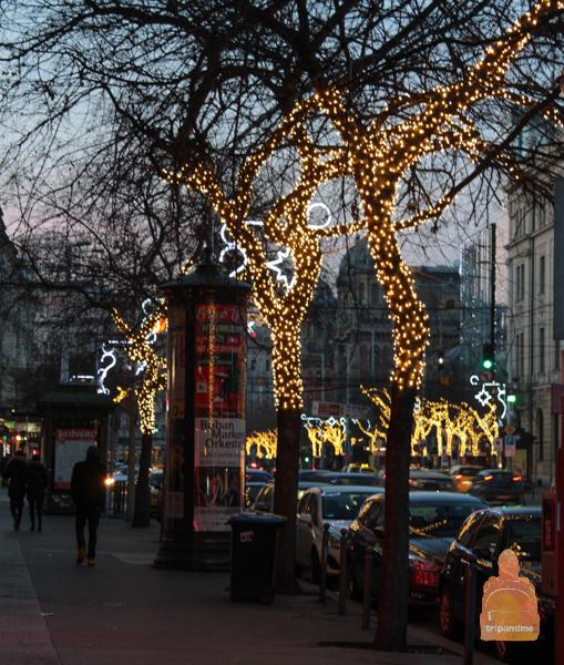 Деревья обвили новогодними гирляндами