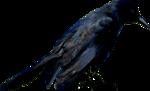 dus-intothedarkness-crow3.png