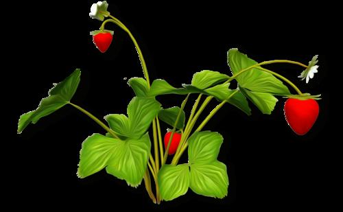 «Strawberry Dreams»  0_952cc_54224b7a_L