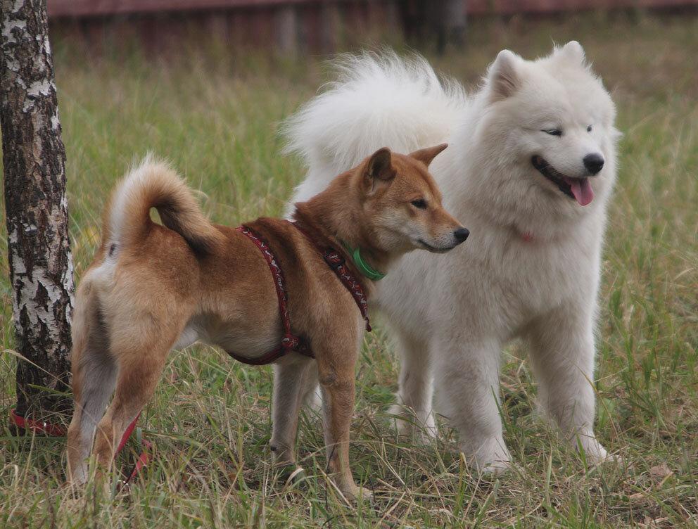 Недельные курсы повышения квалификации для собакообожак :-) Приглашаем всех!!! - Страница 3 0_7d77f_171d87df_XXL