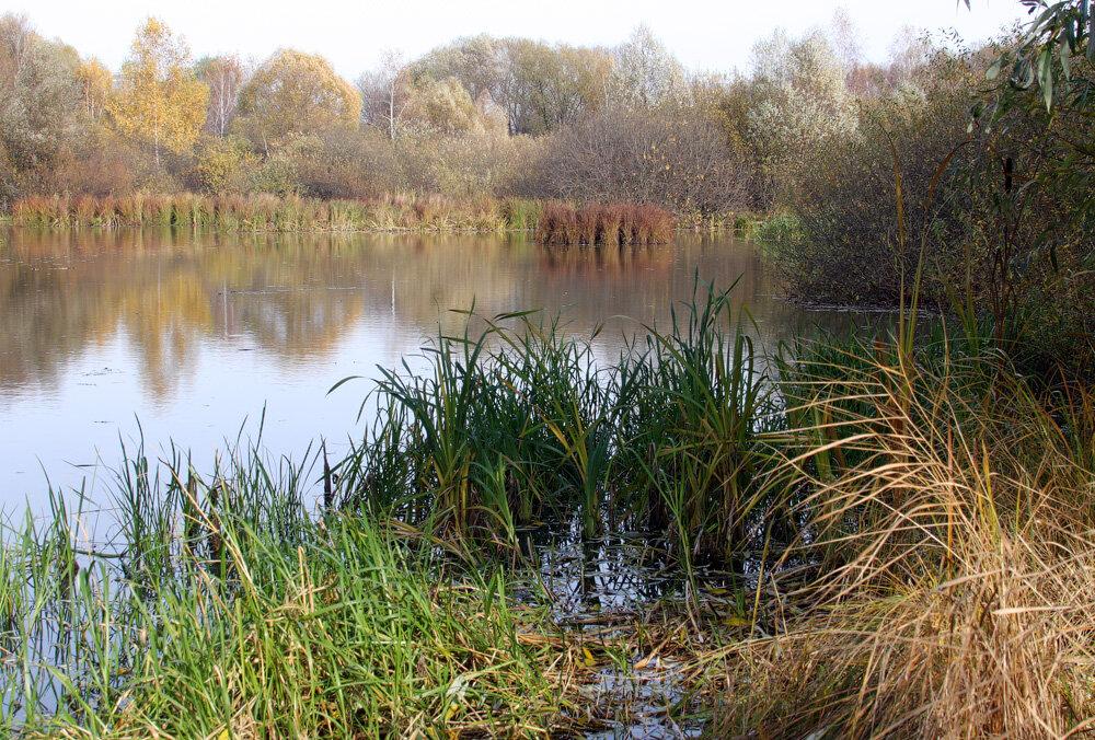 Строгинское болото