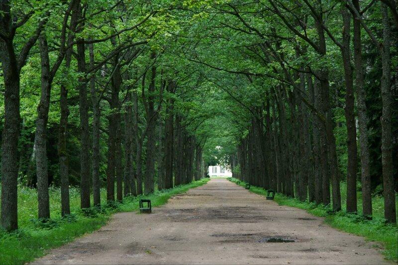 Павловский парк, Район Большая звезда