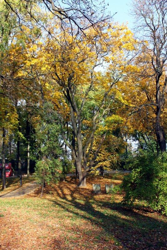 Осень в Мариинском парке