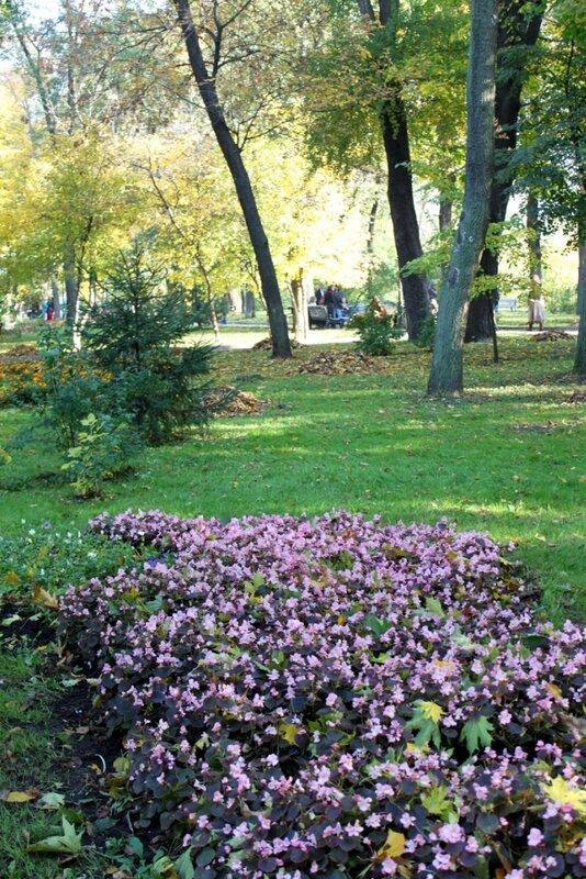Осенние цветы Хрещатого парка